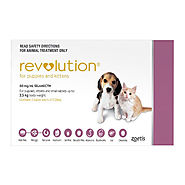 Cheap Revolution for Cats: Flea and Heartworm Treatment