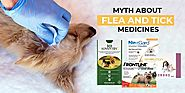 Common Flea and Tick Medicine Myths Busted!