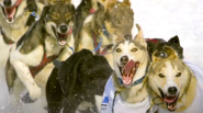 The Iditarod & Math