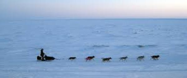 Headline for Iditarod Videos