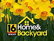 WNEP Home And Backyard Contest (Clue Word Required)