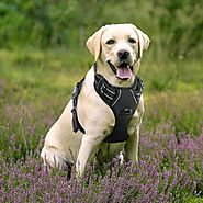 Top 10 Best No Pull Dog Harness in 2018 Reviews (June. 2018)