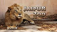 How Much Do You Know about Jaipur Zoo?