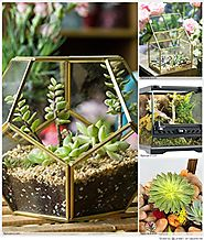 Top 10 Best Geometric Terranium Glass Box Reviews 2018-2019 on Flipboard