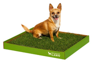 DoggieLawn Disposable Dog Potty with REAL Grass - STANDARD 24x20