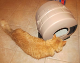 Choosing A Litter Box and Keeping Odors Under Control