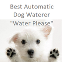 Best Automatic Dog Waterer 2014