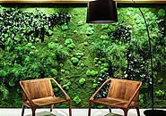 Landscape design company in UAE | Natural green wall in Uae