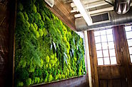 Best Green Wall Systems in UAE | Preserved Moss Wall in Dubai, UAE
