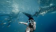 Safety rules for swimming with whale sharks