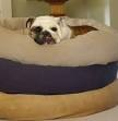 Pet Beds Large Dogs