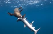 Images of the World - Sharks: Deadly or Endangered? (Part I).