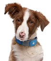GPS Dog Tracker Reviews