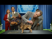 Audi Big Game Commercial - Doberhuahua