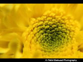 Moments Shoot's Photo Walk 13 - Flower Exhibition @ VJTI, Matunga on 22nd Feb 2014