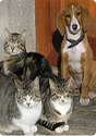CDFA > 2014 MUNICIPAL SPAY-NEUTER GRANT FUND PROGRAM