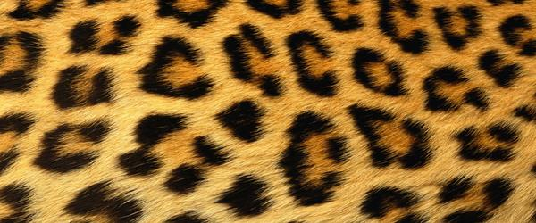 Headline for Leopard Print Room Decor for 2014