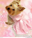 Dress Your Dog In Pink Dog Dresses