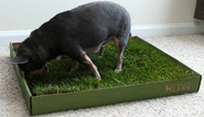 Best Large Indoor Dog Potty Litter Box with Real Grass Reviews