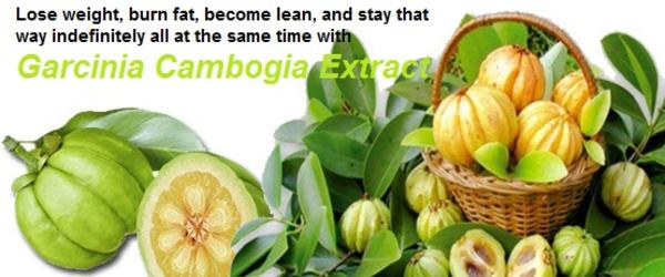 "Headline for Garcinia Cambogia Extract: The ""Holy Grail"" in Losing Weight"