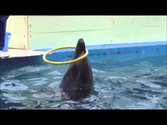 Illusions Of Captivity: The Unseen Dolphin Show [Not Graphic]