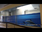 "Small Dolphin Tank ""The Fish Bowl"" at Taiji Whale Musuem"