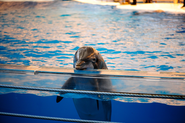 Germany's Largest Tour Operator Drops Dolphin Shows From Itinerary