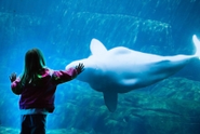 Vancouver Aquarium bucks national trend by keeping whales and dolphins