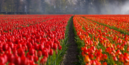 The Garden of Europe: Keukenhof, Netherlands