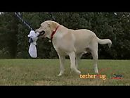 Tether Tug Large Dog Demo