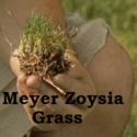 Meyer Zoysia Grass | The Original On Sale