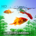 Fish Encyclopedia