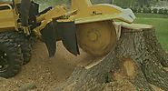 Tree Stump Grinding | Stump Removal Adelaide
