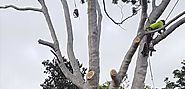 Tree Services Adelaide | Qualified Arborist Adelaide | TJA Tree Services