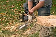 What you would like to understand regarding Stump Removal?