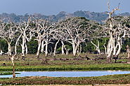 The Wilds of Yala