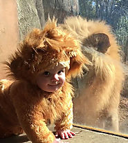 Baby meets a lion dressed as a Cub and this lion is confused silly · Love Ur Pet