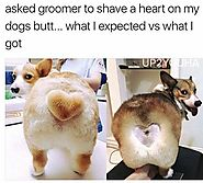 Hilarious pet haircuts that totally went wrong · Love Your Pet