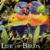 Life of Birds by Life of Birds