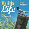 This Birding Life/Bird Watcher's Digest by Bird Watcher's Digest