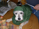 Best Dog Raincoats Reviews 2014