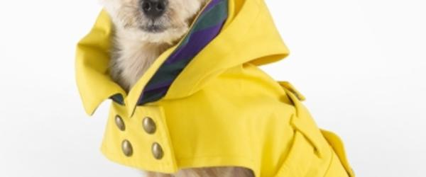 Headline for Best Dog Raincoats Reviews 2014