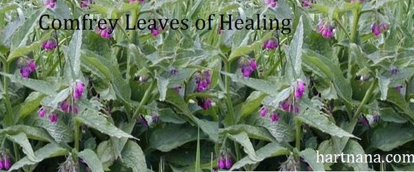 Headline for Comfrey Leaf Benefits