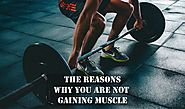 The Reasons Why You Are Not Gaining Muscle - Idea Express