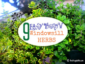 Ten of the Easiest Herbs to Grow on your Windowsill