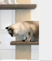 Best wayfair post cat tree