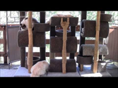 How To Build a Six Foot Cat Tree.