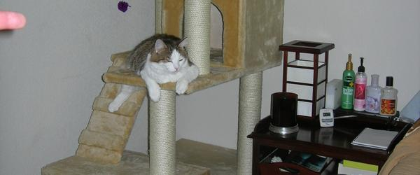 Headline for Easy Cat Tree Building Plans