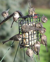 Bird feeder - Wikipedia, the free encyclopedia