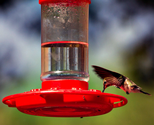 Hummingbird Feeders - Some Facts and Cool Ideas.